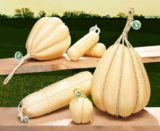 Проволоне - твёрдый нежирный итальянский сыр